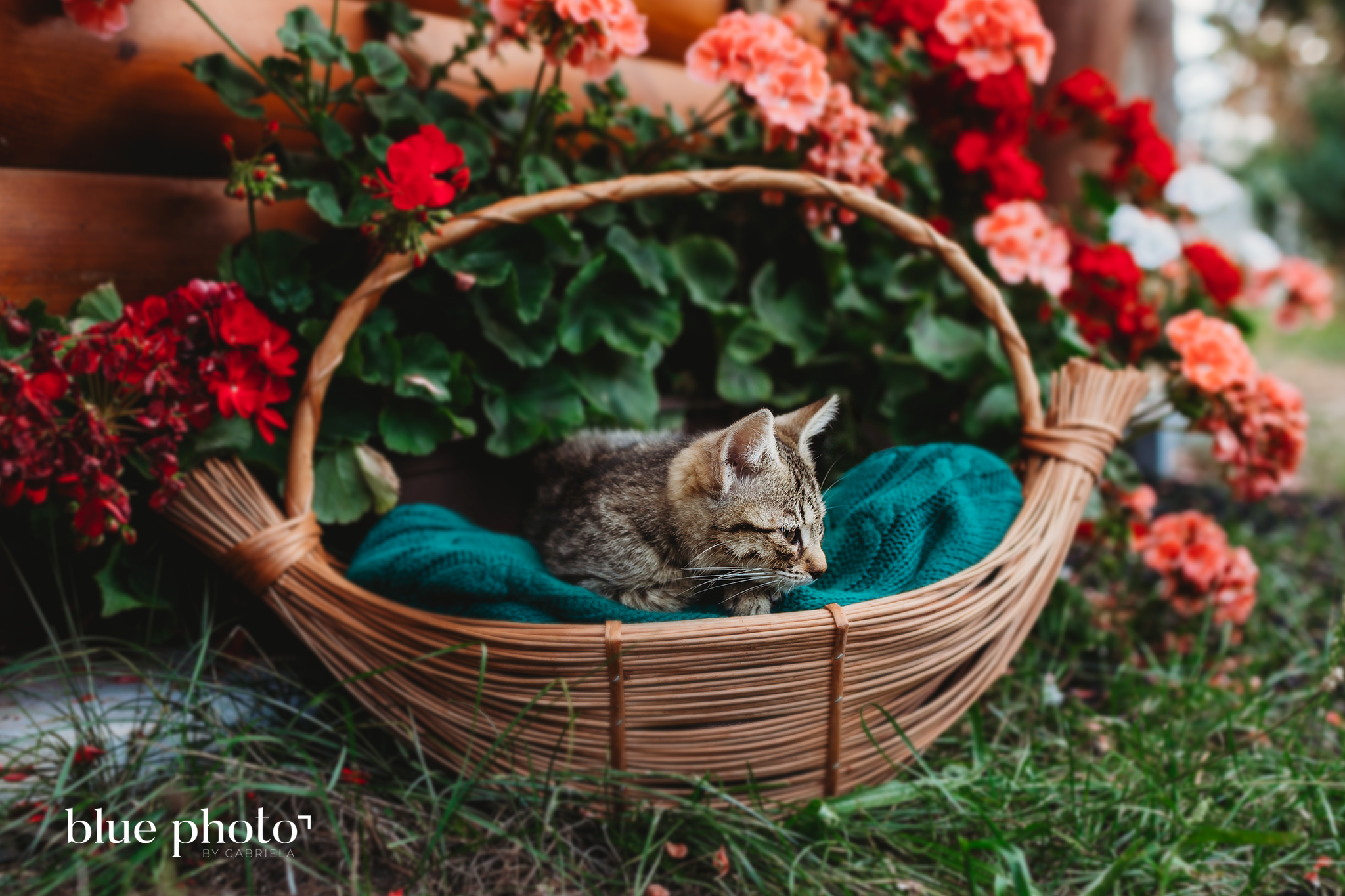 Little Kitten in the basket - West London based family and pet photography, outdoor session